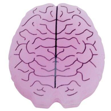 Gamma Schwingungsdämpfer Brain