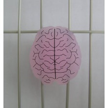 Gamma Schwingungsdämpfer Gehirn einzeln